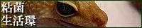 粘菌生活環